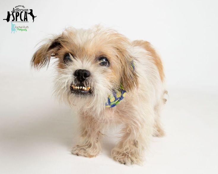 19++ Jefferson parish animal shelter images
