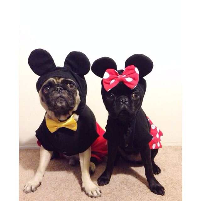 Mickey and Minnie Pugs!