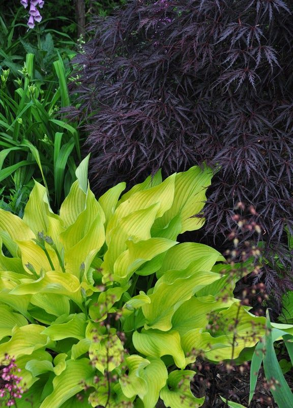 Three Dogs in a Garden: Garden Canadensis, Part 2: Planting Combinations for Shade