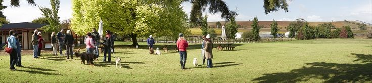 Yarra Valley Doggy Winery Tour - enjoy a pawfect day of food, wine and walks with your best friend and all in the comfort of our dog welcoming bus Bella.