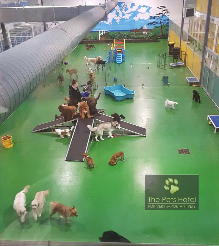 The Pets Hotel (@thepetshotel)   Twitter                                                                                                                                                                                 More