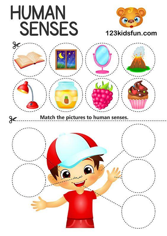 5 Senses | Free Activities | Senses preschool, Preschool ...
