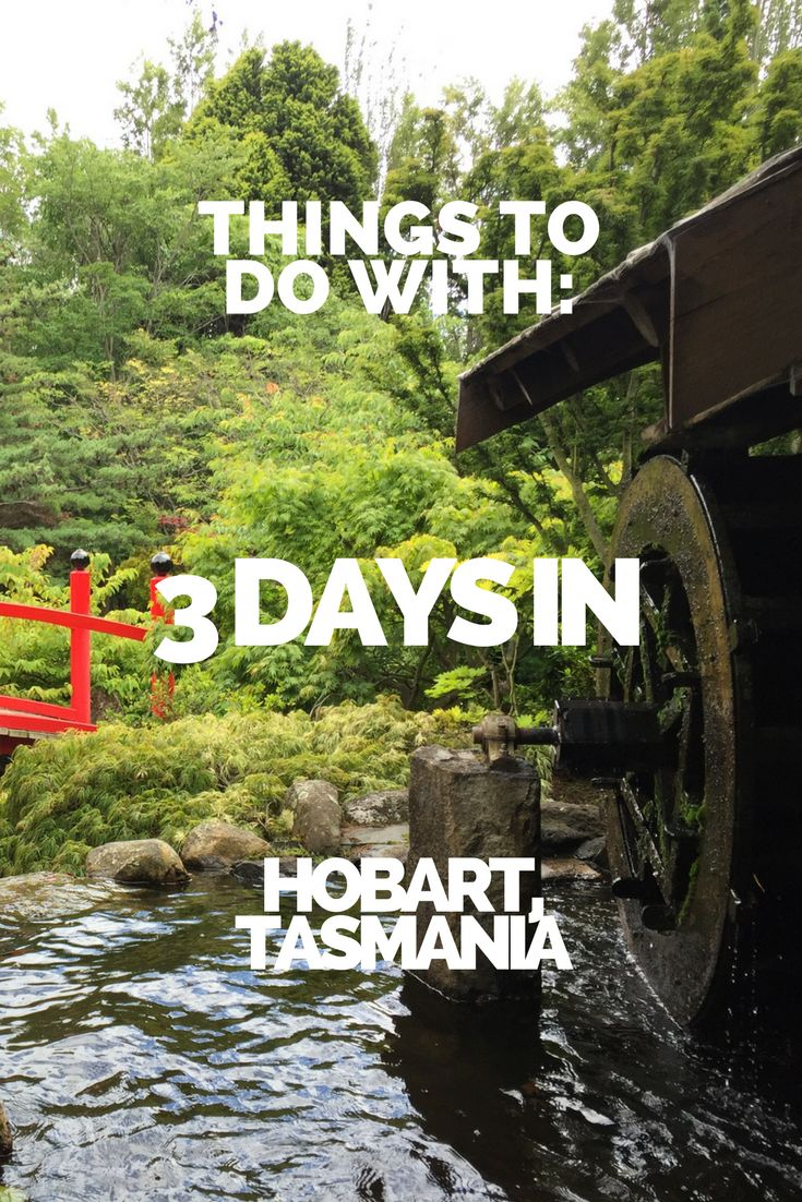 There is plenty of great stuff to do in Hobart, Tasmania. If you're only in Hobart for a few days, here are a few things you can get involved in. #travel #tasmania #australia #hobart #couples #travelcouple #couplestravel #budget #thingstodo