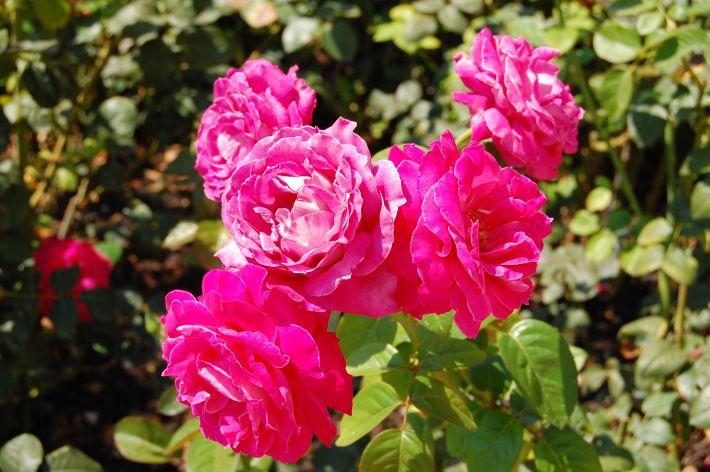 The Gorgeous Gardens of Villa Ephrussi de Rothschild