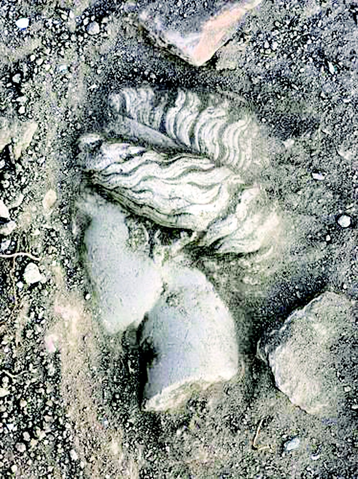 A marble sculpture head of Artemis from the fourth century uncovered in Aydın's Alabanda. DHA photo
