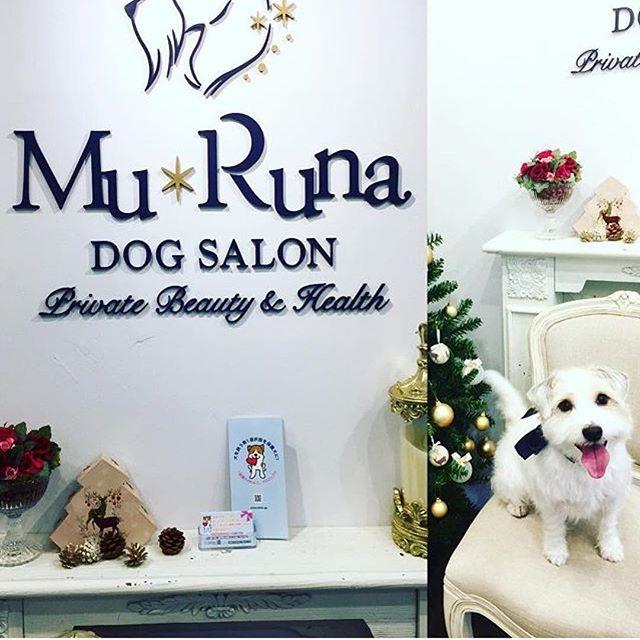 🐕💫 @mikapoti さんがパンフレットをドックサロン Mu Runaさんに置いて下さり、素敵な記事にして下さいましたので、ご紹介のリポストをさせて頂きます😃💕✨ 本当にありがとうございました😊✨ ーーーーーーーーーーー 置いて頂いてありがとうございます✨ #いぬ #ドッグサロン#dog #ワンコ #jackrussellterrier #じゃっくらっせるてりあ #保護犬#保護犬を家族に 💗 ・ ・ ・ #元保護犬 #保護犬 #雑種犬 #繁殖犬 #里親  #犬 #愛犬 #rescueddog  #adopteddog #保護犬のわんこ写真集  #保護犬のわんこかるた  #保護犬のわんこスタンプ #保護犬のわんこプロジェクト #保護犬のわんこ