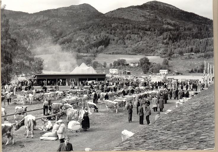 Dyrskun i Seljord, 1956