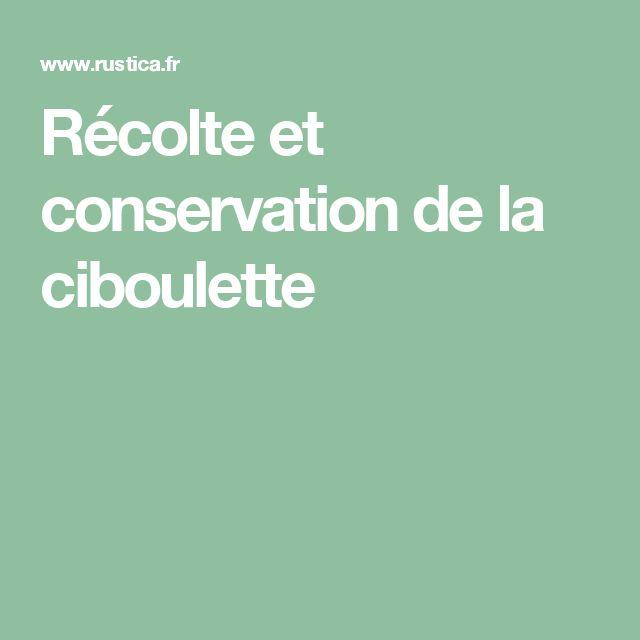 Récolte et conservation de la ciboulette