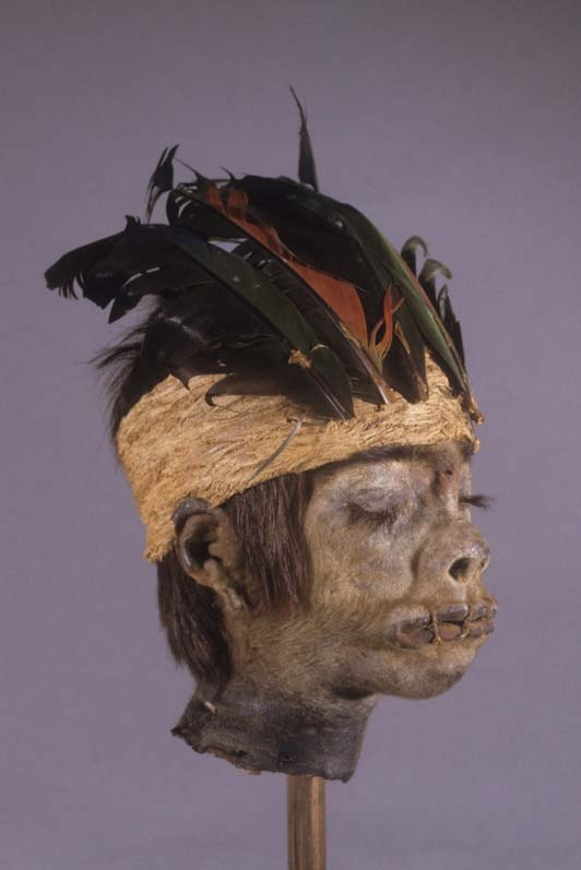 Non-ceremonial human shrunken heads are often adorned with features not found on ceremonial tsantsas, such as a feathered headdress.