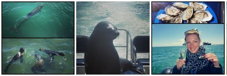 BOAT TRIP: seals, dolphins, pelicans, fresh oysters!!! What a trip :)))