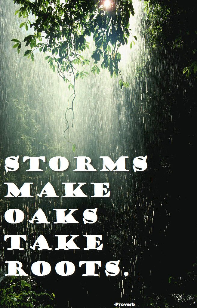 Storms make oaks take root, as the proverb goes, and the same is true for us...