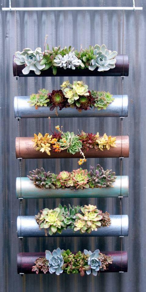 Plantas :: ROSA SHOCK