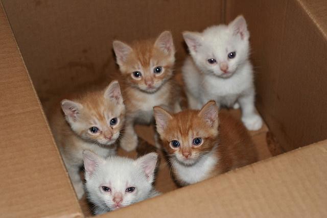 Box 'o kittens