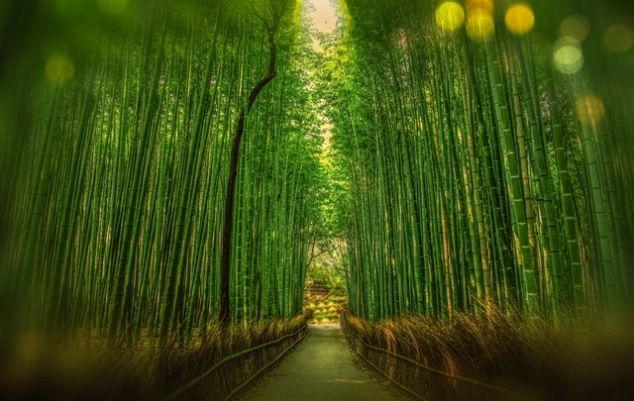 Did you know that certain species of bamboo can grow as tall as 80cm in a single day #GoGreenerHomes
