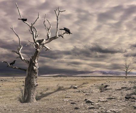 Barren - Deserts Wallpaper ID 1144628 - Desktop Nexus Nature