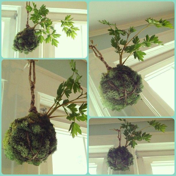 M s de 1000 ideas sobre hierbas colgantes en pinterest - Jardines verticales paso a paso ...