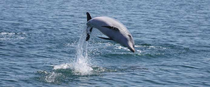 A happy jumping dolphin!