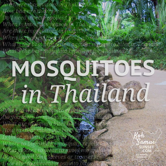 Are you coming to Thailand with the glum knowledge that you're a walking mosquito magnet? Mosquitoes in Thailand are a big question if you're new to the tropics or coming with children. Protecting yourself is easy, once you know a few local tricks (and what to bring with you). Let's make sure Thailand's mosquitoes are...Read More »