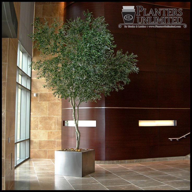 12 best artificial trees images on pinterest artificial for Growing olive tree indoors
