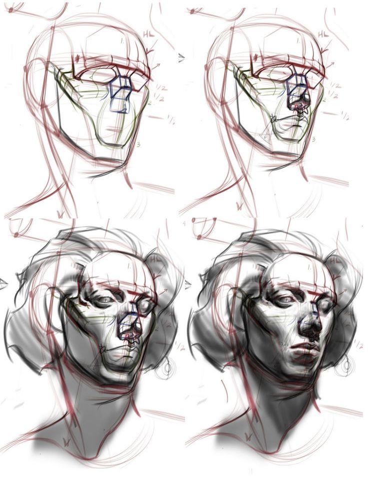 human head 3/4 anatomy