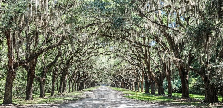 Vast, oak-shaded and quintessentially Southern, historic Savannah is full of gorgeous photo-worthy sights begging to be captured.