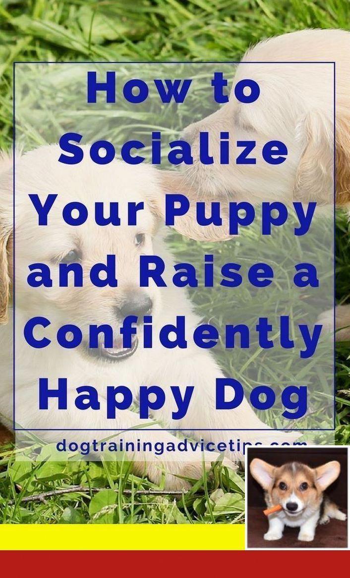 Good Citizen Dog Training Near Me And Dog Behavior During Heat