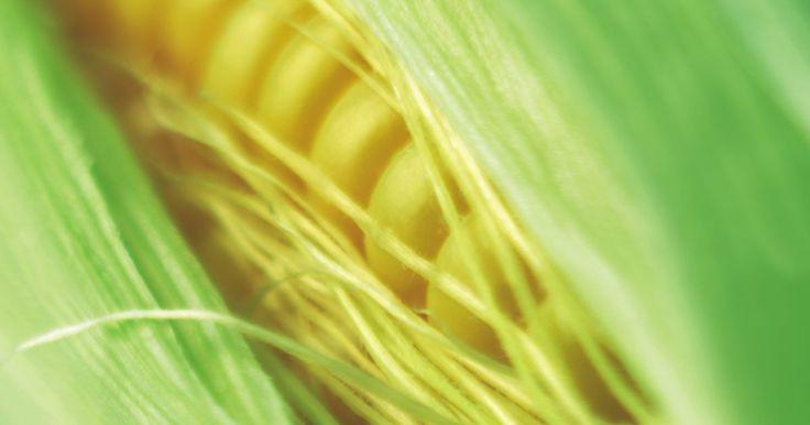 Cómo asar mazorca de maíz en una parrilla a gas. Cuando el verano está en pleno desarrollo y la mazorca de maíz está en temporada, mucha gente aprovecha la oportunidad para agregar espigas frescas de maíz a sus menús semanales. En lugar de cocinarlos en agua hirviendo, simplifica el proceso asando tu maíz en una parrilla a gas. El proceso de asado es simple y puede llevar menos tiempo que el ...