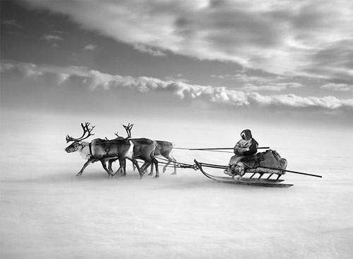 Nenets People, Yamal Peninsula, Siberia, Russia (single sledge) 2011
