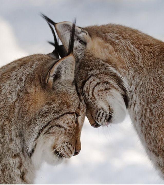 Ces 20 photos d'animaux amoureux vont vous faire fondre !