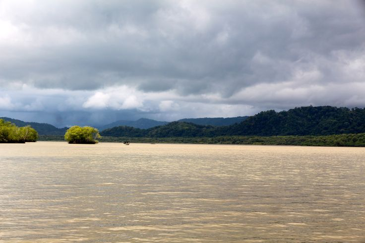 The murky waters at the estuary of the river Coto are home to  pristine mangroves, an easy boat ride away from our retreat. Be part of the dream at Golfo Dulce Retreat www.gdretreat.com