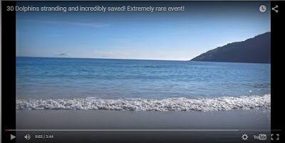 Άρωμα Ικαρίας: Ένας τουρίστας βιντεοσκοπούσε στην παραλία, όταν  ...