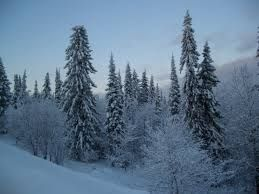 Bioma: Bosque frío o taiga. Lugar al que corresponde: America del Sur. Problemas ambientales: derrames de petroleo y cambios de temperatura.