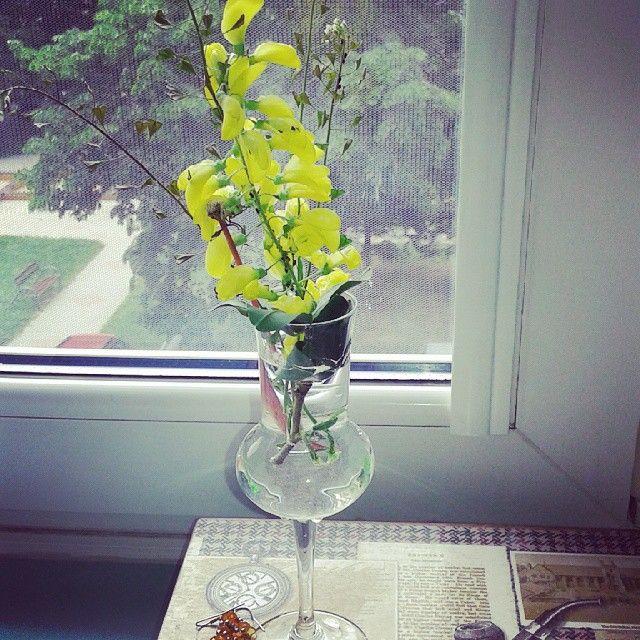 #flower#nature