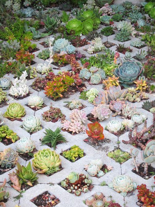 Just love Succulents!  So sculptural.