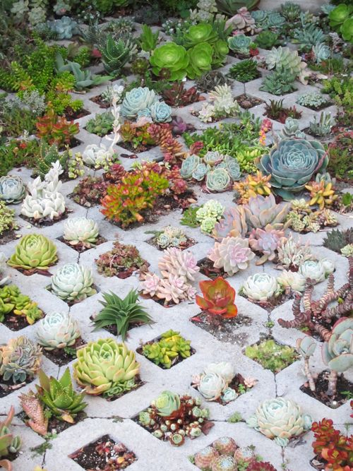 concrete paving planted with succulents