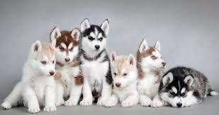 """Résultat de recherche d'images pour """"photos des plus beau chien au monde"""""""