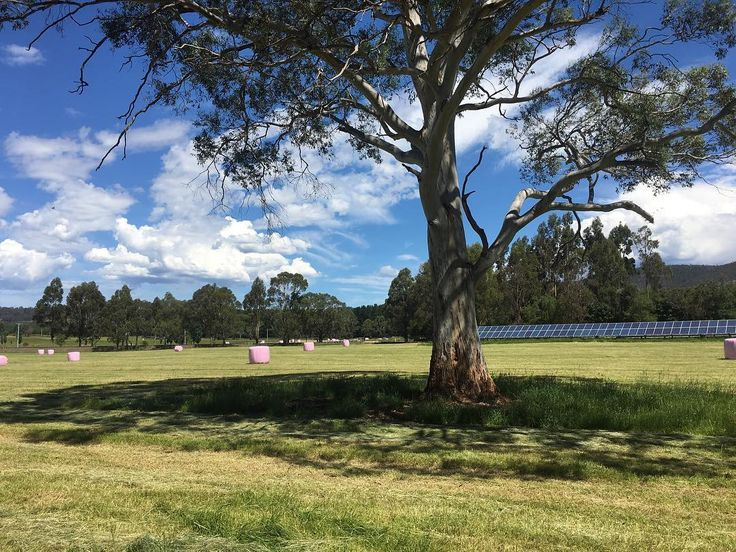 A photo to capture some extra feels. Pink silage bales to raise funds and awareness for @mcgrathfoundation and generating electricity with the PV solar panels. #balepink17 #warmandfuzzy #farmlife #tapexagri #solarpower
