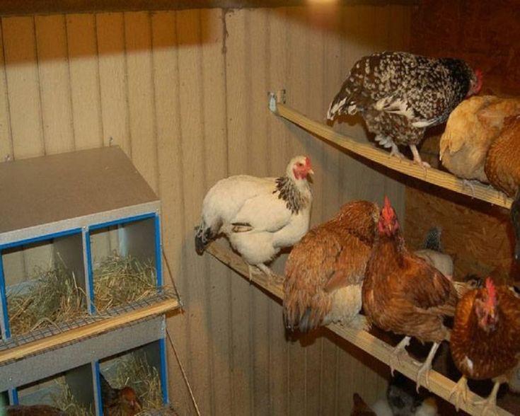 как устроена курица внутри фото рядом неоготическое здание