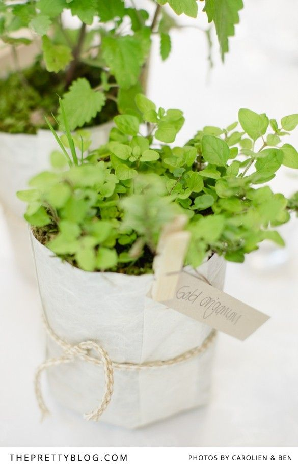 Fresh Herb plant table decor