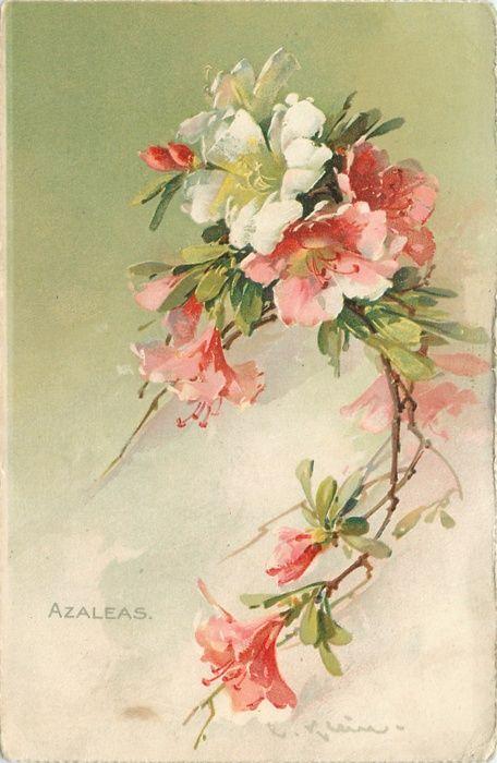 AZALEAS  Catherine Klein