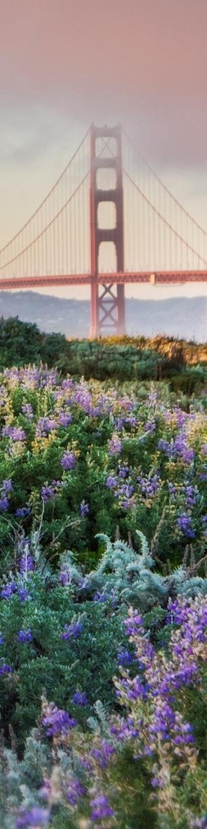 Flowers and Bridge, San Francisco, California