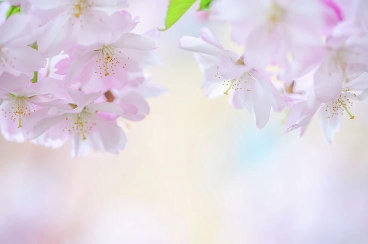 Descending Deities. Spring Pastels Photograph by Jenny Rainbow