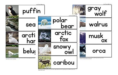 Arctic Animal Word Wall Cards. Cut apart for a word matching set.