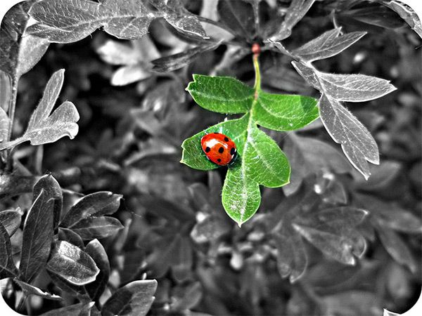 Ladybird by rosiesykes in impressive black white photography with a touch of color