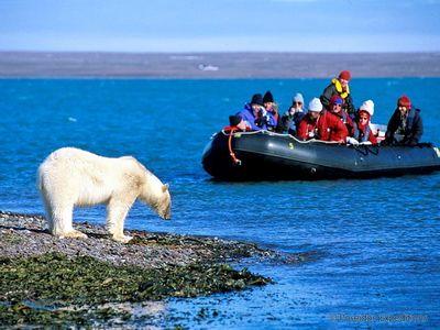 Северный полюс и Арктика