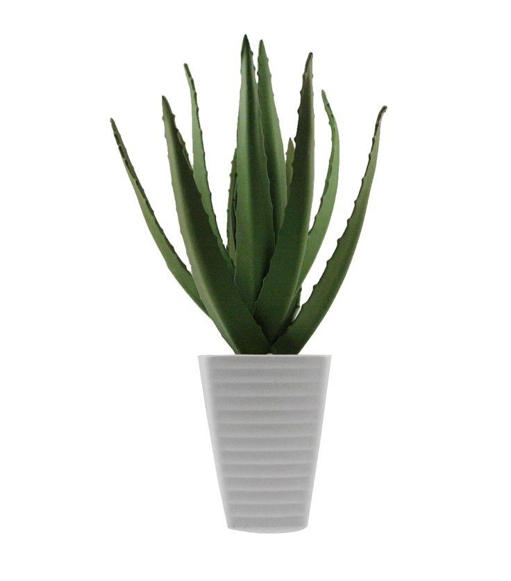 Aloe vera plante lav