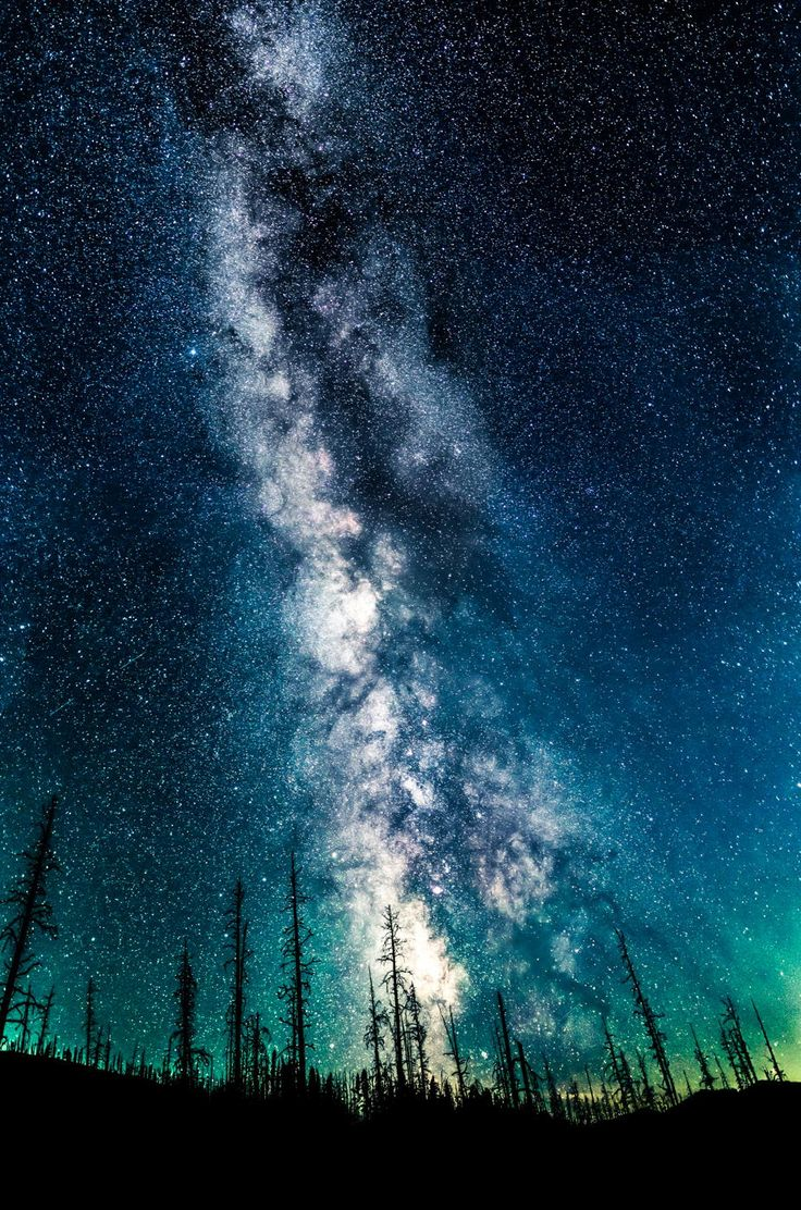 Behind a Yellowstone forest devastated by fire, the Milky Way thrives in the night.