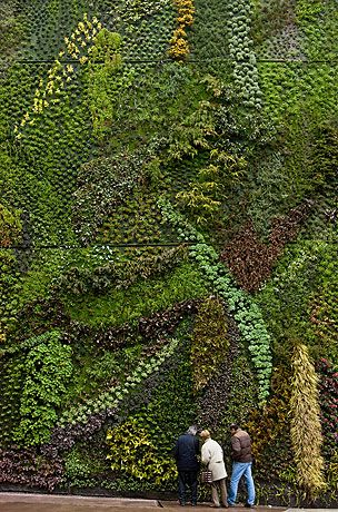 beautiful green wall.     plants absorb CO2 while also reducing the urban heat island effect.  what's not to love?