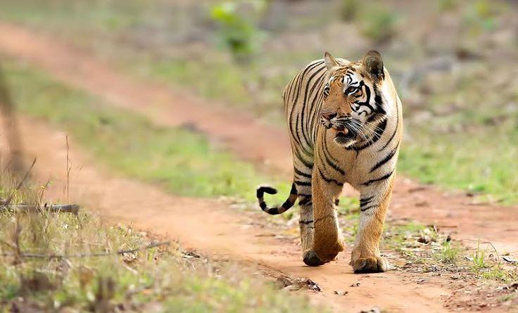 Into the Wild! Best Wildlife Weekend Getaways from Hyderabad   MakeMyTrip Blog