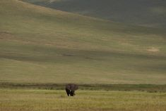Passage to Africa - Ngorongoro Highlands - Tanzania #Elephant